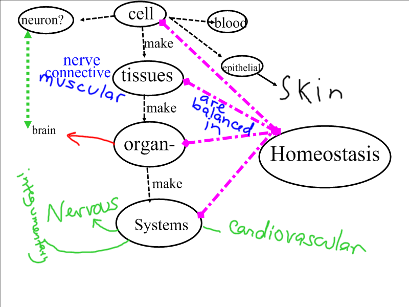 Body Systems Concept Map System Concept Map Answers